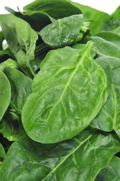 Spinach is rich in betacarotene and lutein, both powerful antioxidants.