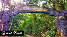 Janakikadu - Janaki Forest is the destination where you can unwind yourself when bogged down by the dry and arid summer landscape.Janakikad comes under the Kuttiyadi range of Kozhikode forest division. Summer Landscape, Tourist Spots, Division, Arch, Range, Outdoor Structures, Canning, Garden, Plants