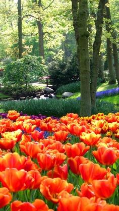 Keukenhof Gardens, Lisse, Holland. Este paraiso existe, por ahi corrian mis hijos Maria Teresa y Arturo , de chicos!  Una maravilla!