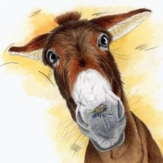by Barnaby Dell Farm Animals, Animals And Pets, Cute Animals, Animal Pictures, Cute Pictures, Wow Art, Horse Art, Pictures To Paint, Animal Paintings