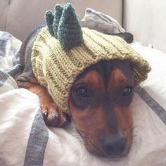 """- Green """"Dinosaur"""" dog snood with three crocheted green spikes - 100% acrylic yarn - Available in small, medium, and large sizes - Pictured: small size on a 8 lbs chihuahua-terrier, 11"""" head If you've"""
