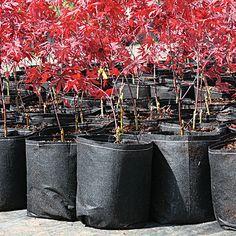 Root Pouch Degradable Pots | A.M. Leonard, Inc.
