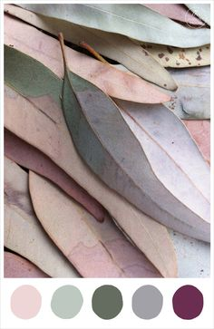 'Late Autumn' colour palette inspiration - blush, sage, moss, fog, mulberry