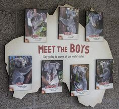 Meet the Boys Sign Zoo Project, Wayfinding Signage, Animal Facts, Exhibit Design, Zoos, Tortoise, Label, Meet, Events
