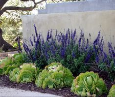 Nice 60 Simple Low Maintenance Front Yard Landscaping Ideas https://wholiving.com/60-simple-low-maintenance-front-yard-landscaping-ideas