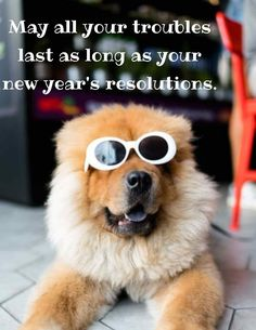Happy new year funny quotes laughing hilarious 2021. May all your troubles last as long as your new year's resolution. #HappyNewYearFunnyQuotes #NewYearFunnyResolutions #NewYearHumor Funny New Years Memes, New Year Meme, Happy New Year Funny, Funny Happy, What Day Is It, Pet News, Pet Sitting, House Sitting, Dog Shedding