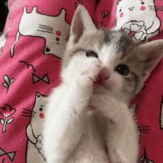 Kitten bathroom routine