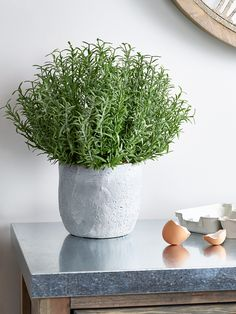 Potted in a stylish grey stone-effect concrete pot, our impressive Rosemary looks so realistic you'll find it hard to believe it's not. Each tabletop pot is filled with a faux Rosemary plant adds a fresh botanical feel to your home all year round, without the hassle of maintaining the real thing.