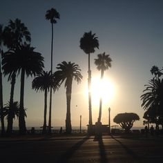 Stunning Sunday Avo Sunset in Santa Monica ☀️