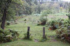 A mossy anniversary spot in the UK, via Poppytalk.