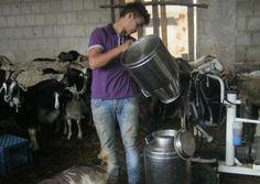 La famiglia Alonzi alleva ovini e produce formaggi: Un mercato difficile: la gente preferisce i centri commerciali