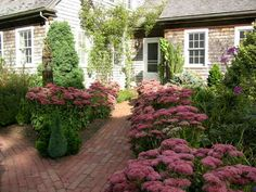 Lots of Sedum 'Autumn Joy' Farmhouse Landscaping, Landscaping Ideas, Outdoor Rooms, Walkway, Garden Paths, Colorful Flowers, Pink Roses, Garden Design, Landscape
