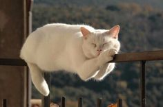 Being a Cat is all about 'balance'. Cats can act totally crazy but other times are so Zen!