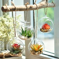 Awesome 33 DIY Home Decor Dollar Store Ideas Perfect For Beginners source : - DIY Garden Decor Dollar Store Crafts, Dollar Stores, Air Plants, Indoor Plants, Potted Plants, Cool Diy, Easy Diy, Dyi, Deco Nature