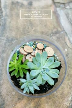 AD Inspiration: Behind the Scenes: How to Create a Simple Terrarium