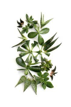 succulents (mary jo hoffman)