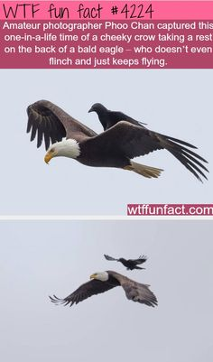 He made that eagle his bitch