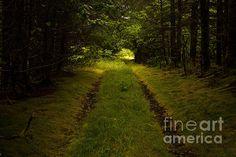 Title  Forgotten Road   Artist  Steven Reed   Medium  Photograph - Photography