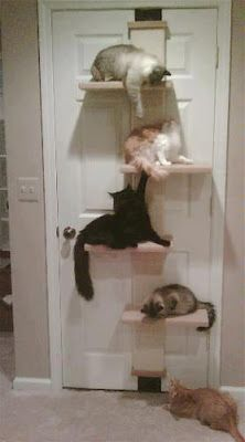 TC-ok I want at least 4 cats so I can do this.  How adorable!!!  I'm sure it causes no fighting amongst the felines!!!!
