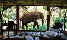 To know more about Makanyane Safari Lodge , Africa Hotel, visit Sumally, a social network that gathers together all the wanted things in the world! Featuring over 2 other Makanyane Safari Lodge , Africa items too! Dream Vacations, Vacation Spots, Africa Safari Lodge, Giraffe Hotel Africa, Places To Travel, Places To Go, Out Of Africa, African Safari, African Elephant