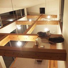bambooboocatさんの、リビング,梁,アクリル板,キャットウォーク,のお部屋写真