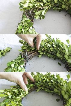 Make a boxwood wreath using fresh boxwood clippings. Perfect addition to festive holiday decor that can also be used year-round with a different ribbon. - Diy for Houses Front Door Decor, Wreaths For Front Door, Door Wreaths, Christmas Wreaths, Christmas Crafts, Christmas Decorations, Holiday Decorating, Creation Deco, Wedding Wreaths