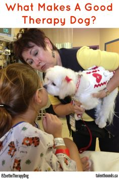 Today we look at what makes a good therapy dog just like adorable Zoe pictured here on a hospital visit.