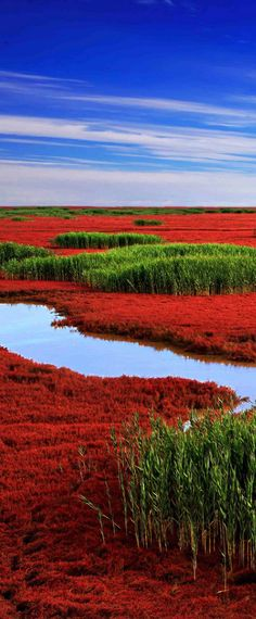 Red Beach from Panjing, China