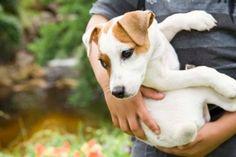 How to Make a Flea Repellent Necklace for Your Dog Dog Urine, Pet Odors, Urine Odor, Pet Dander, Dog Upset Stomach, Dog Pee Smell, Pet Odor Remover, Essential Oils Dogs, Pets