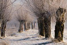 Knotten in de sneeuw. Winter Fairy, Winter Garden, Moon Photography, Winter Photography, Winter Songs, Winter's Tale, Winter Scenery, Street Art, Wonderful Picture