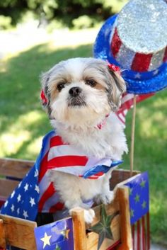 Did you know that July 5th is the busiest day for animal shelters nationwide?  So many dogs and cats get scared by fireworks and escape their homes, trying to get away from the loud, scary noises.  So how can you keep your pets safe on Independence Day?