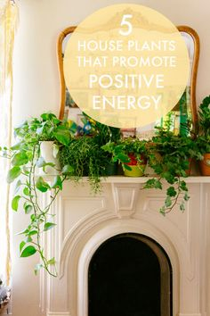 5 House Plants That Promote Positive Energy | eBay