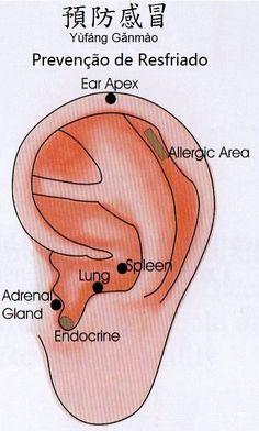 Aurículo para prevenção de resfriados. Ear Reflexology, Cupping Therapy, Mudras, Traditional Chinese Medicine, Qigong, Tai Chi, Physical Therapy, Health, Massage Tips