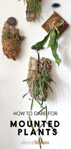Hanging Plants, Indoor Plants, Air Plants, Indoor Flowers, Container Gardening, Gardening Tips, Indoor Gardening, Urban Gardening, Container Plants