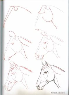 How-To-Draw-Horses - ~*Horse Heaven*~ by constance