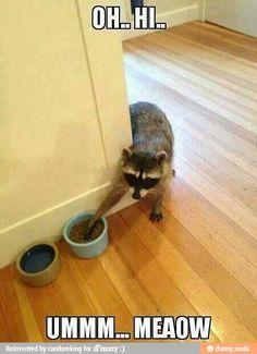 Cute animal humor! hahahaha http://riverrunpetcarehospital.com