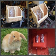 DIY Bunny Rabbit Hydration Station Made From Scrap Wood - I'd love to make something similar for my chinchillas.