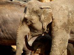 #visit #zoo #prague #czechrepublic #animal #nature
