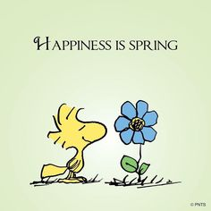 Happiness is spring Snoopy Peanuts Quotes, Snoopy Quotes, Peanuts Cartoon, Peanuts Snoopy, Peanuts Comics, Snoopy Und Woodstock, Woodstock Bird, Joe Cool, Charlie Brown And Snoopy