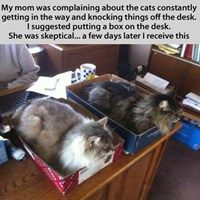 Inbox and Outbox? No, Cats Box