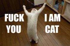 F You, I Am Cat!