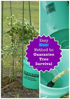 Tutorial on Easy Water Method to Guarantee Tree Survival ~ Creative Cain Cabin