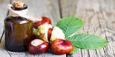 Jak vyrobit kaštanovou tinkturu a mast Nordic Interior, Eggplant, Plum, Health Fitness, Coconut, Homemade, Vegan, Vegetables, Fruit