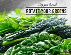 Rotating your greens is an important part of green smoothies - here are the reasons why we should do it!