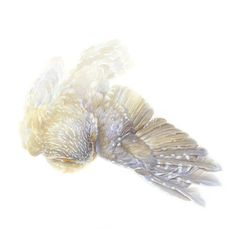 owl road kill http://mydogoscar.com/ Catherine Hamilton
