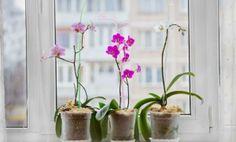 Hortelã, alecrim e poejo são Repelentes Naturais. Conheça outras Plantas Repelentes. Leia mais sobre Repelente Natural na Revista do ZAP