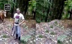 MUNDO LIVE NEWS NOTICIAS: MATA CAVALO COM TIRO DE 12 (ESPINGARDA ) Homem mat...