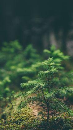 Green Moss Flower Nature  #iPhone #5s #wallpaper