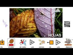 VIDEOS - Aprende las estaciones.  Video de BabyRadio con pictos de Arasaac para trabajar las estaciones del año. Spanish Teacher, Spanish Class, Weather Vocabulary, Spanish Activities, Early Childhood, Youtube, Seasons, How To Plan, November