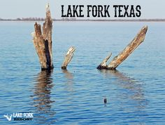 Our Lake Fork cabins are waterfront and motel rooms have views. Annual RV lots, 2 boat ramps, store, and covered boat slips. Plan your Lake Fork trip to fish. Rv Lots, Lake Fork, Boat Slip, Bass Boat, Rv Parks, Lodges, Alaska, Pond, Swimming Pools
